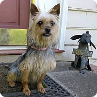 Adopt A Pet :: Trixie - Plainfield, CT