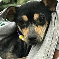 Adopt A Pet :: Rex-ADOPTION PENDING - Boulder, CO
