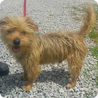 Adopt A Pet :: Popcorn - ready 7/1 - Sparta, NJ