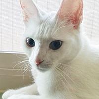 Adopt A Pet :: Porcelyn - North Highlands, CA