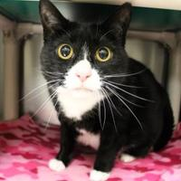 Adopt A Pet :: Gracie - McCall, ID
