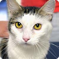 Adopt A Pet :: Thea - Casa Grande, AZ