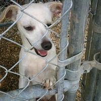 Adopt A Pet :: Blake - Opelousas, LA