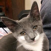 Adopt A Pet :: Zucchini - Trevose, PA