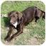 Photo 1 - Labrador Retriever Mix Puppy for adoption in Mahwah, New Jersey - Annie