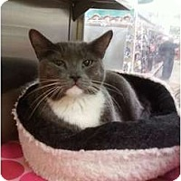 Adopt A Pet :: Giovanni - Fort Lauderdale, FL