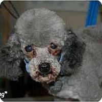 Adopt A Pet :: Sterling - Dayton, OH