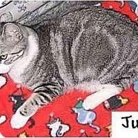 Adopt A Pet :: Judy - AUSTIN, TX