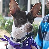Adopt A Pet :: Frank - North Palm Beach, FL