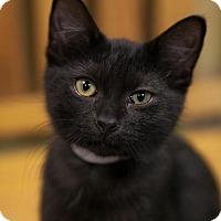 Adopt A Pet :: Nora - Byron Center, MI