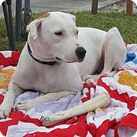 Adopt A Pet :: Chiquita - Kingwood, TX