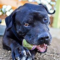 Adopt A Pet :: Durango - Acton, CA
