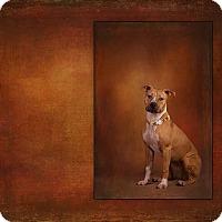 Adopt A Pet :: Riah - Des Moines, IA