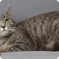 Adopt A Pet :: Croissant - Blackwood, NJ