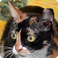 Adopt A Pet :: Queenie - Englewood, FL