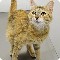 Adopt A Pet :: Apricot - Springfield, IL