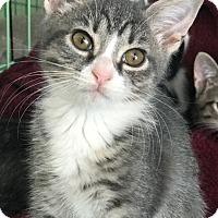 Adopt A Pet :: Talia - Island Park, NY