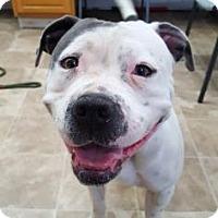 Adopt A Pet :: Dorothy - Chico, CA