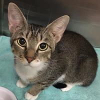 Adopt A Pet :: Lil'One - Visalia, CA