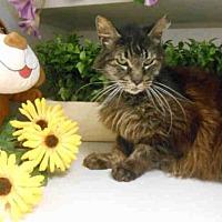 Adopt A Pet :: BRUCE - Fairfield, CA
