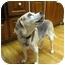 Photo 2 - Beagle Dog for adoption in Indianapolis, Indiana - Buddy
