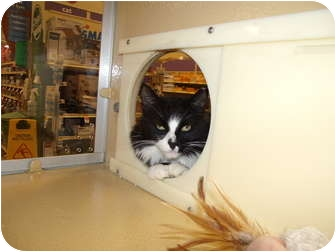 Domestic Longhair Cat for adoption in Vails Gate, New York - Mindy