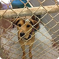Adopt A Pet :: Travis - Schererville, IN