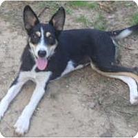 Adopt A Pet :: Katie - Windham, NH
