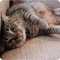 Adopt A Pet :: Sierra (kitten-like!) - Portland, OR
