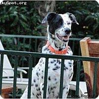 Adopt A Pet :: Hudson - Newcastle, OK