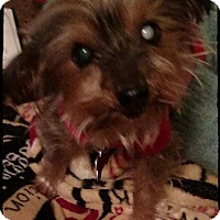 Adopt A Pet :: Penelope - Los Angeles, CA