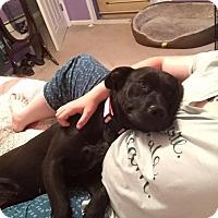 Adopt A Pet :: Cherry - richmond, VA