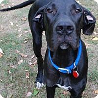 Adopt A Pet :: Buddy #2 - Pearl River, NY