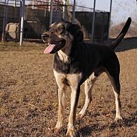 Shepherd (Unknown Type) Mix Dog for adoption in Warner Robins, Georgia - Justin