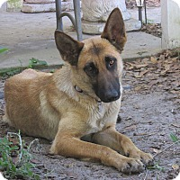 Adopt A Pet :: Sandy - Green Cove Springs, FL