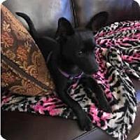 Adopt A Pet :: Kallie - Avon, NY