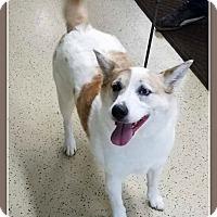 Adopt A Pet :: Fern AKA Shelly - Elburn, IL