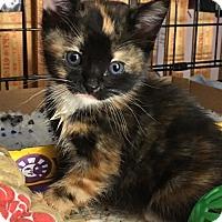 Adopt A Pet :: BEATRIX - Lakewood, CA