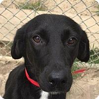 Adopt A Pet :: Nola - Rockville, MD