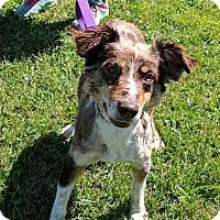 Adopt A Pet :: Dez - Lisbon, OH
