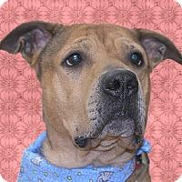 Adopt A Pet :: Wrinkles - Cincinnati, OH