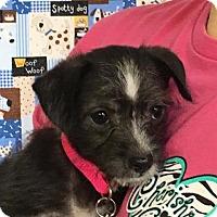 Adopt A Pet :: Bonnie - Wharton, TX