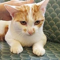Adopt A Pet :: Cedric - Palo Alto, CA