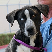 Adopt A Pet :: Troy - Palmdale, CA