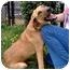 Photo 3 - Hound (Unknown Type) Mix Dog for adoption in Inman, South Carolina - Bentley