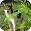 Photo 1 - Rat Terrier Mix Dog for adoption in Concord, California - Bandit