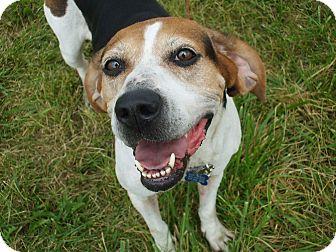 Treeing Walker Coonhound/Hound (Unknown Type) Mix Dog for adoption in Upper Sandusky, Ohio - Sera