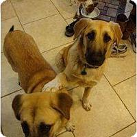 Adopt A Pet :: Scrappy and Scuba Doo - Newcastle, OK
