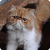 Adopt A Pet :: Louis - Columbus, OH