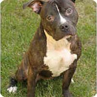 Adopt A Pet :: Captain Jack - Chicago, IL